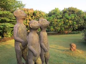 Three mongoose